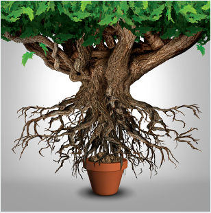 Platz fuer Wachstum schaffen